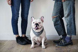 Asian couple with French bulldog