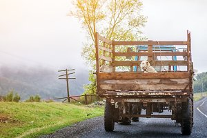 A white dog sits in old truck
