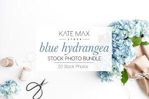 Blue Hydrangea Stock Photo Bundle