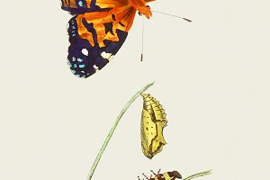 Illustration of butterfly (PSD)