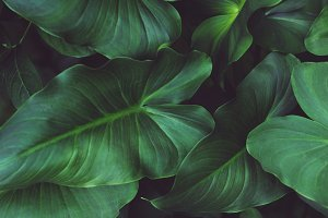 Lush Tropical Leaves