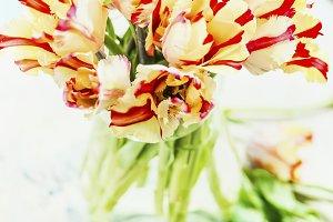 Tulips bunch in glass vase