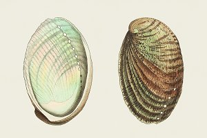 Illustration of shell (PSD)