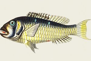 Illustration of fish (PSD)