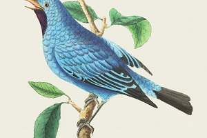 Illustration of bird (PSD)
