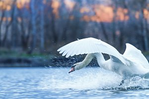 pure white bird and spray water