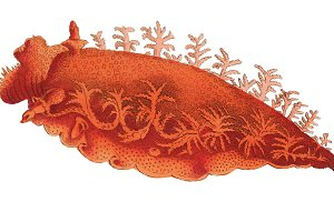 Illustration of marine life