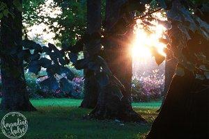 Sun set in a park