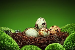 Quail eggs and feathers in a nest