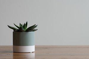 Minimalistic Succulent Cactus
