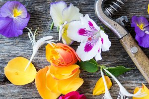 Colorful Edible Flowers