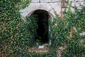 ivy growing on an old tunnel