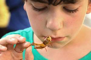 boy with disgust grimace hold unusial strange thai food roasted grasshopper