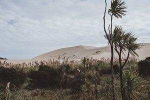 New Zealand Dune Landscape