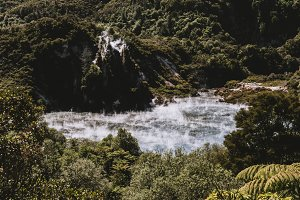New Zealand Flora in Summer