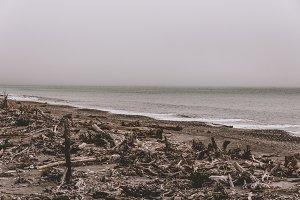 Driftwood on New Zealand Beach