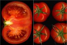 tomato collage 20.jpg
