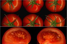 tomato collage 12.jpg