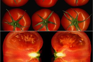 tomato collage 14.jpg