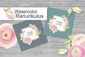 Watercolor ranunculus.