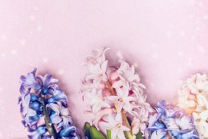 Pastel hyacinths on light pink
