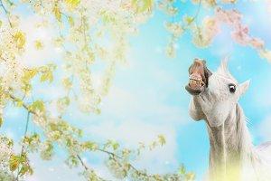 Horse smiling at spring blossom