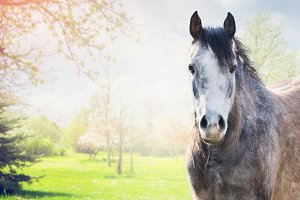 Gray horse at spring nature