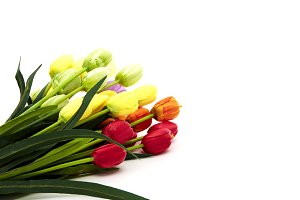 Bouquet of Fresh Multicolor Tulips