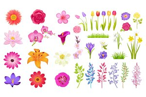 Set of Different Flowers Color Vector Illustration