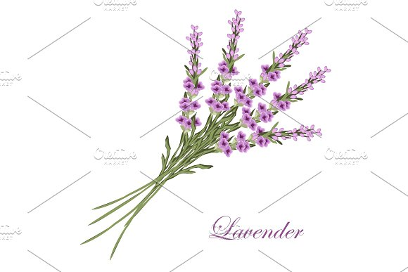 Vintage Floral Background With Lavender In Provence Style On Dots Background