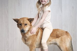 little girl riding a huge dog. The child plays in the traveler