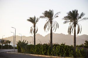 Palm trees and mountains in Egypt