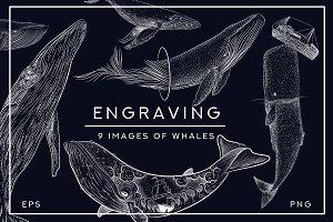 Set of whales. Retro style engraving