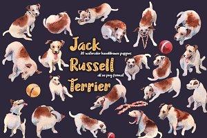 Jackrussell terrier