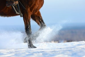 Horse running across the snowy field
