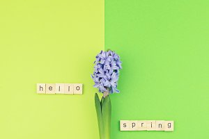 Hello Spring concept on lime green