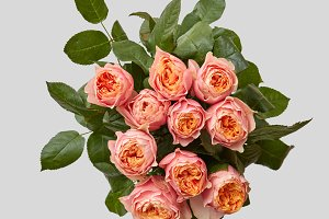 close-up of pink bouquet of rose with green leaves on a gray background