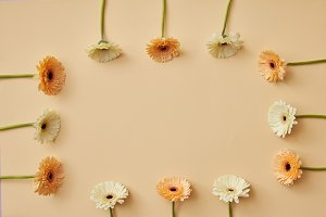 Frame made of beige and orange gerbera flowers for post card Valentine's Day or Mother's