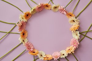 Round frame of gerbera flowers on a pink background with copy space