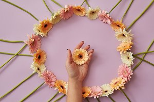 Beautiful round frame of gerbera flowers on a pink background.