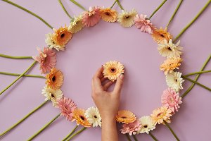 frame of gerbera flowers on a pink background with female hand