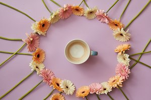 cup of coffee in a round frame of gerbera flowers on a pink background.