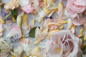 Natura background with colored rose petals and buds flowers