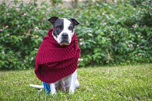 Dog with red scarf in the park