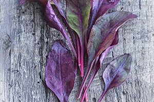 Spring young purple salad leaves