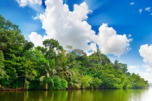 Lake in jungle