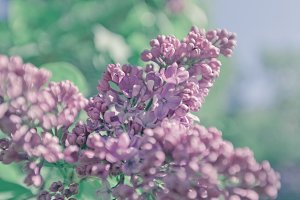 Beautiful lilac background. Pastel