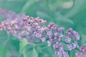 Lilac background. Pastel