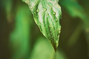 Close up of tropical leaf