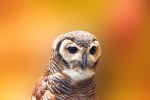 owl, bird, animal,